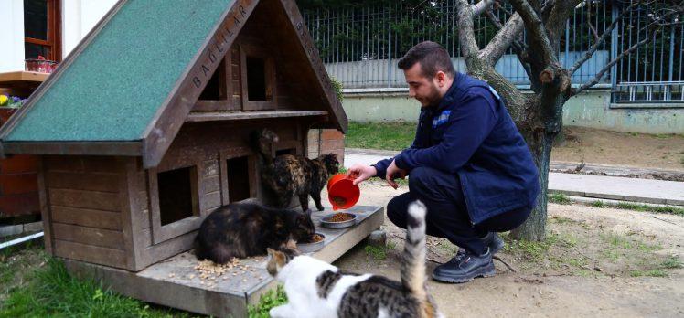Koronavirüs Salgınında Sokak Hayvanları Unutulmadı
