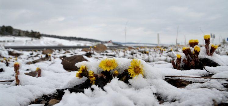 Doğu Anadolu'daki 4 ilde sıcaklıklar gece sıfırın altına düştü
