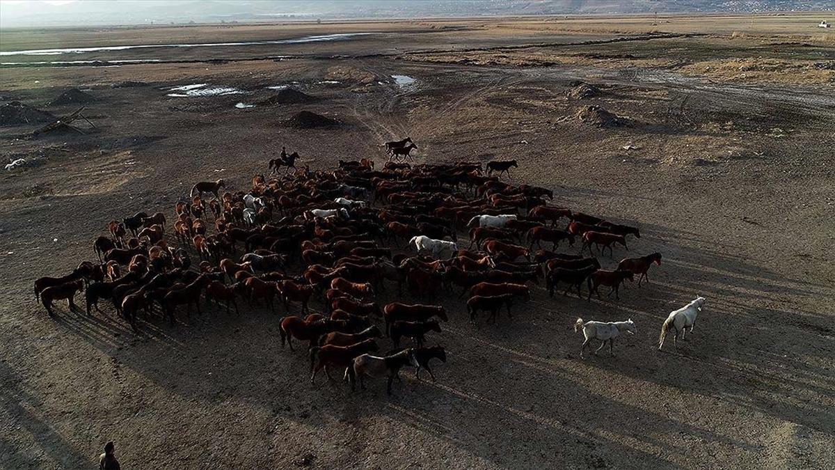 Yılkı atlarıyla ünlü Hürmetçi Sazlığı, doğa tutkunlarının vazgeçilmez adresleri arasında yer alıyor