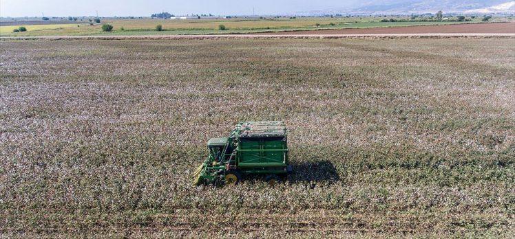Amik Ovası'nda ekim alanları genişleyen pamukta rekolte beklentisi arttı